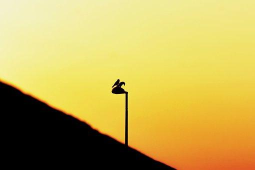 Silhouette, Morning, Sunrise, Landscape, Dawn, Lamppost