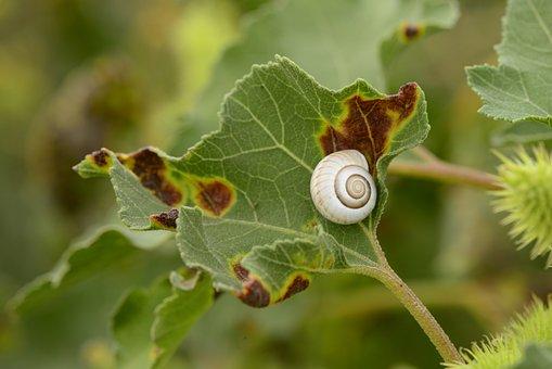 Snail, Shell, Leaf, Snail Shell, Mollusk, Gastropod