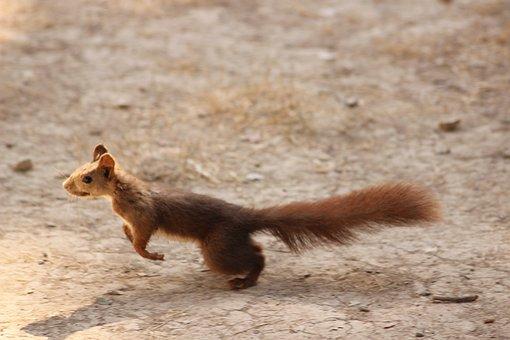Squirrel, Safari, Mammals, Portrait