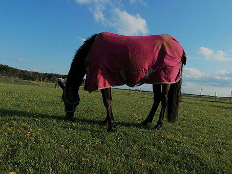 Horse, Pasture, Pony, Mare, Sky, Clouds, Grass, Green