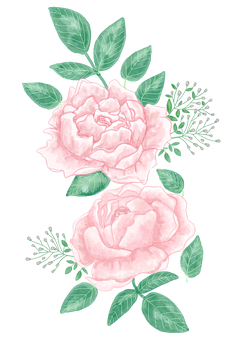 Roses, Flowers, Decorative, Leaves, Plant, Pink Roses