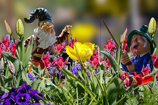 Garden Gnome, Flowers, Spring, Tulips, Daffodils, Bud