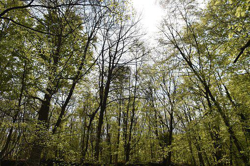 Trees, Forest, Woods, Woodlands, Undergrowth, Branches