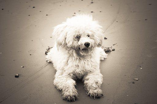 Puppy, Animal, Dog, Pet, Portrait, Canine, Mammal