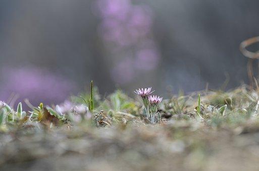 Flowers, Plants, Meadow, Spring, Bloom