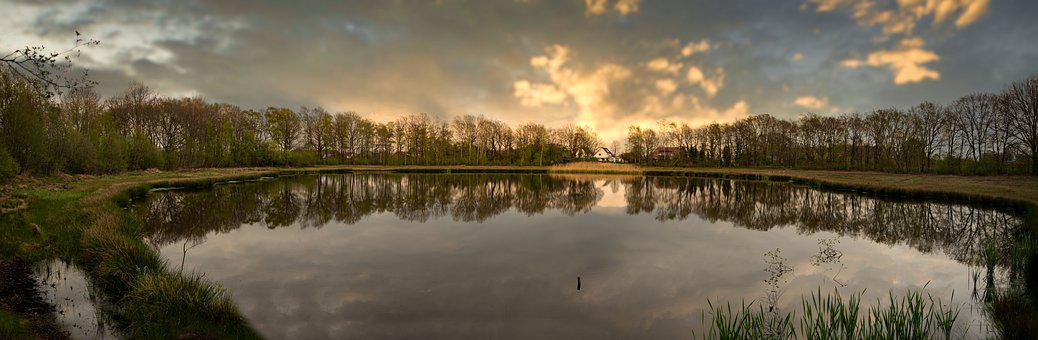Panorama, Nature Reserve, Swamp, Trees, Reflection