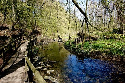 River, Boardwalk, Forest, Stream, Creek, Water, Trees