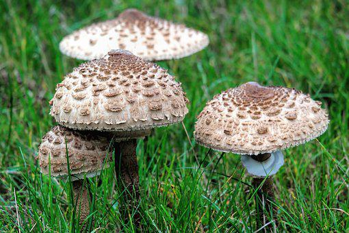 Mushroom, Meadow, Grass, Nature, Autumn