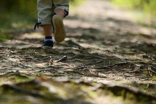Child, Wandering, The Path, Poland, Hiking Trail