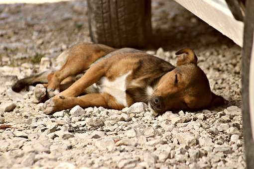 Dog, Doggy, Sleep, Stray, Eb, Pets, Friend, Animal