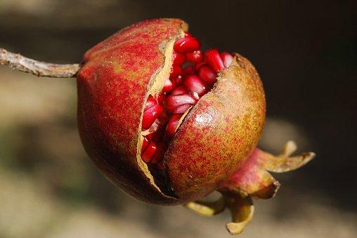 Pomegranate, Fruit, Flower, Exotic, Anti-oxidant