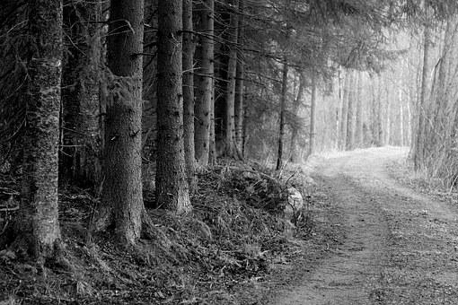 Road Through The Woods, Forest Road, B W Photo