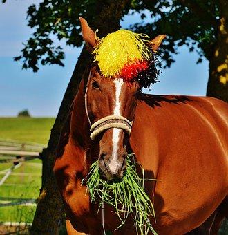 European Championship, Football, 2016, Germany, Horse