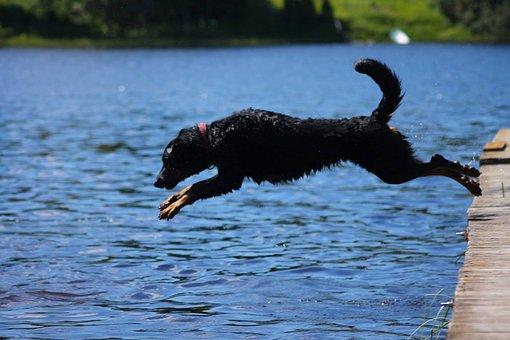 Beauceron, Bathing, Cute, Jump, Jumping, Dog, Adorable