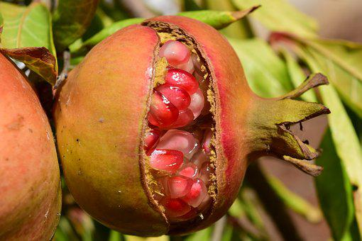 Pomegranate, Pomegranate Seeds, Close, Ripe, Nature