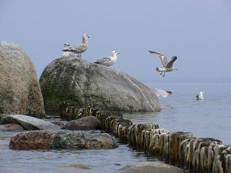 Gulls, Sea, Mood, Bird, Animal, Water Bird, Stones