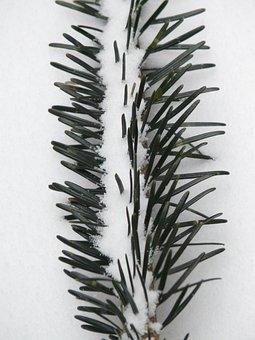 Pine Needles, Tannenzweig, Needles, Branch, Fir