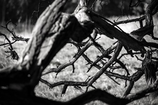 Branch, Old, Morsch, Gnarled, Rot, Branches, Tree