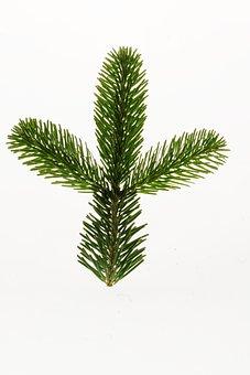 Nordmann Fir, Fir, Christmas, Branch, Christmas Tree