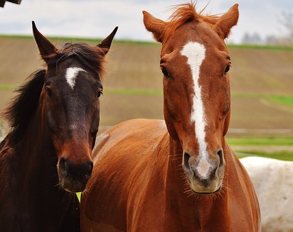Horses, Harmony, For Two, Animal World, Two, Animals