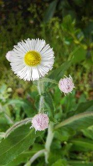 Hello There, Flower, Beautiful, Daisy, Wild