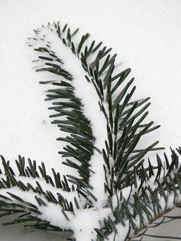 Branch, Tannenzweig, Pine Needles, Needles, Fir