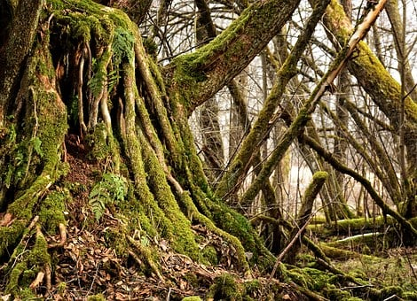 Root, Old, Tree Root, Nature, Log, Plant, Mis Shapen