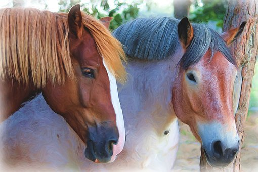 Painting, Oil Painting, Photo Painting, Horses
