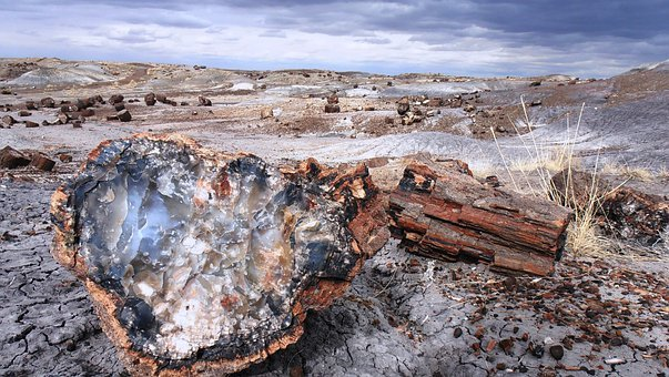 Petrified Forest, National, Park, Arizona, Fossils