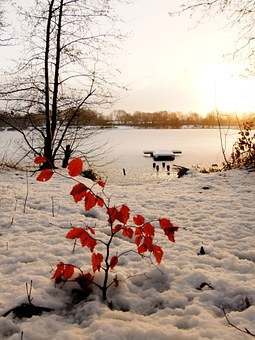 Ice, Leaves, Red Leaves, Water, Cold, Lake, Frozen