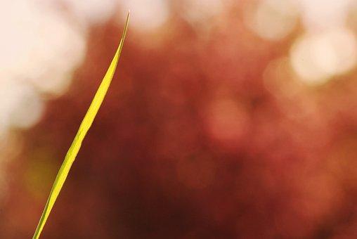 Grass, Strand, Bokeh, Sunny, Color, Sweetness, Joli
