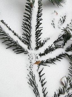 Tannenzweig, Pine Needles, Needles, Branch, Fir