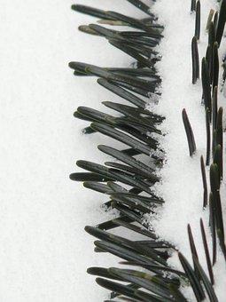 Pine Needles, Close, Tannenzweig, Needles, Branch, Fir