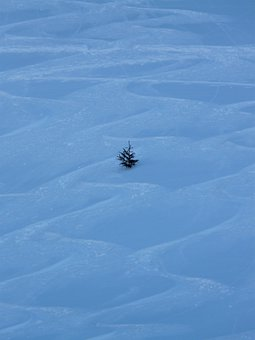 Fir Tree, Tree, Wintry, Winter, Traces, Skiing, Wag