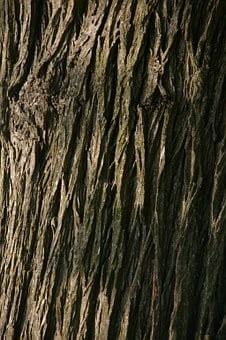 Background, Tree, Macro, Strong, Solid, Backdrop