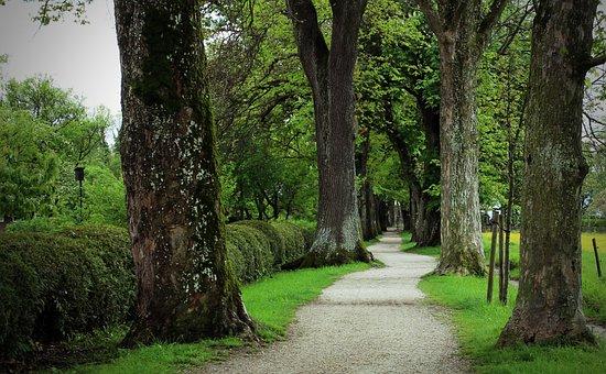 Trees, Avenue, Tree, Away, Nature, Oak, On Both Sides