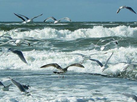 Sea, Beach, Wave, North Sea, Water, Nature, Surf, Spray