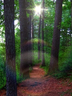 Pine Forest, Forest, Mystic, Ghost, Pine Trees, Way