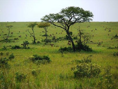 Savannah, Uganda, Wild Animals, Freedom, Wide, Antelope
