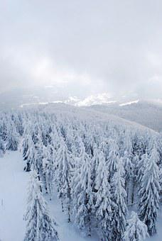 Winter, Mountains, Forest, Tree, Christmas Tree, Snow