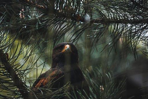 Bird, Tree, Branches, Beak, Feathers, Ave, Avian