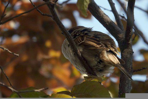 Sparrow, Jungle, Hide, Rest, Beautiful Feathers