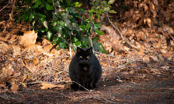 Cat, Black Cat, Animal, Sitting Cat, Waiting Cat
