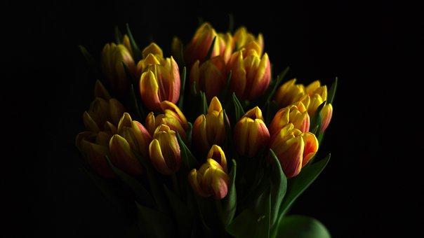 Flowers, Tulips, Flower Vase, Bouquet, Black Background