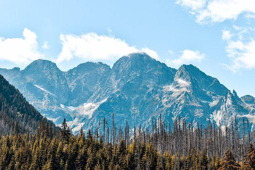 Mountains, Trees, Forests, Conifers, Coniferous