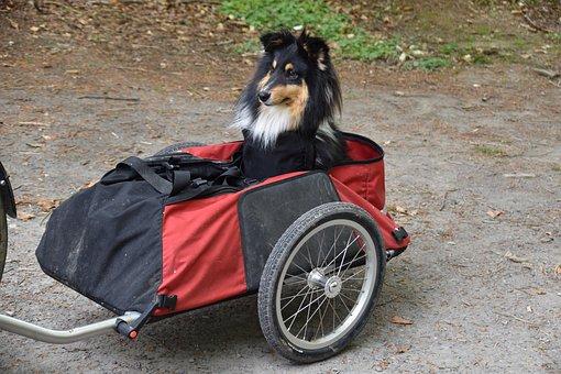 Dog, Side-car, Carry Your Dog, Dog Bag