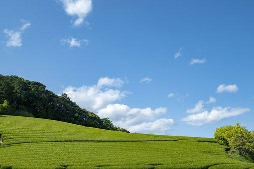 Sky, Tea, Field, Cloud, Fresh Green, Outdoors, Spring