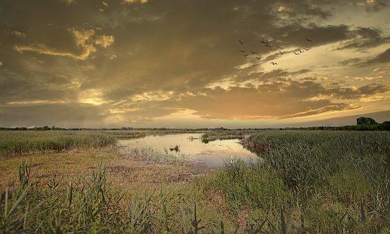Meadow, Marsh, Sunrise, Wetlands, Reed, Grass, Field