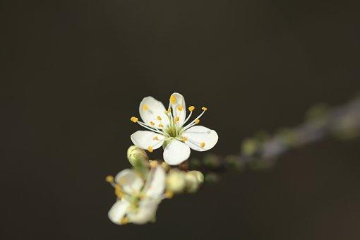 Flowers, Petals, Pistils, Plant, Flora