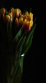 Flowers, Tulips, Flower Vase, Bouquet, Tulip Bouquet
